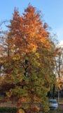 Autumn park. Car near a tree with yellowed leaves, autumn park, yellow leaves on the ground Royalty Free Stock Photo