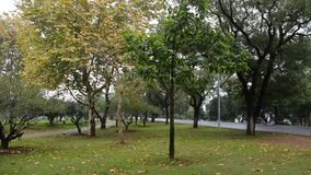 Autumn park in Changsha stock footage