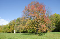 The autumn park with cherry Royalty Free Stock Photo