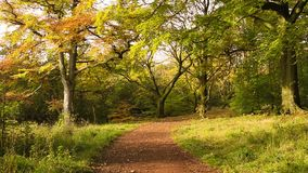 Autumn in the park with chestnut trees. Autumn in the park with chestnut, Scotland, UK stock video footage