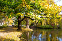 Autumn park in the city  Hanover Stock Images