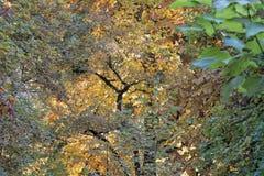Autumn park closeup Royalty Free Stock Images