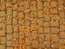 Autumn park cobble stone footpath with dry orange oak leaves , colorful leaf Stock Images