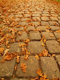 Autumn park cobble stone footpath with dry orange oak leaves , colorful leaf Stock Image