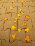 Autumn park cobble stone footpath with dry orange yellow maple leaves , colorful leaf Stock Image