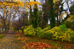 Autumn park coloration Stock Photos