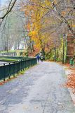 Autumn in Park, with colored leaves. On the trees Royalty Free Stock Photography