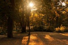 Autumn park. Colorful sunny autumn park backlit Stock Photography