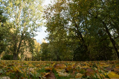 Autumn park. Colorful tree alley covered with leaves Stock Photography