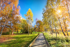 Autumn park with colorful trees, falling leaves on a sunny day. Royalty Free Stock Photo
