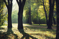 Autumn park. Colorful trees in autumn park. Natural theme Royalty Free Stock Images