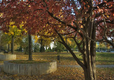 Autumn in a Park. Autumn colors in a park Stock Photos