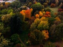 Autumn Park com o zangão diferente do ar da opinião superior de muitas árvores imagens de stock
