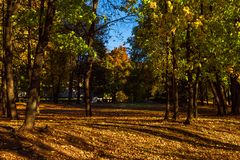 Autumn Park covered with fallen leaves stock images