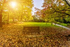 Autumn Park covered with yellow leaves and bench. Royalty Free Stock Photo