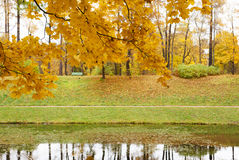 Autumn park in the day Royalty Free Stock Images