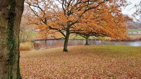 Autumn in the park, Denmark royalty free stock images