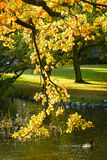 Autumn in the park - Denmark Royalty Free Stock Photo