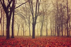 Autumn park in dense fog. Autumn foggy landscape with bare autumn trees. And fallen leaves Royalty Free Stock Images