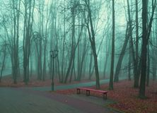 Autumn park in dense fog - foggy autumn park with fallen autumn leaves and bench near the bare trees. Autumn park in dense fog. Foggy autumn park with fallen Royalty Free Stock Image