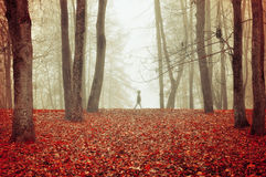 Autumn park in dense fog with ghostly silhouette- autumn landscape with autumn trees and red dry fallen leaves. Stock Image