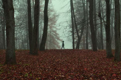Autumn park in dense fog with ghostly silhouette- autumn landscape with autumn trees and red dry fallen leaves. Royalty Free Stock Photos