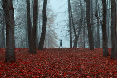 Autumn park in dense fog with ghostly silhouette- autumn landscape with autumn trees and red dry fallen leaves. Stock Images