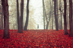 Autumn park in dense fog with ghostly silhouette- autumn landscape with autumn trees and red dry fallen leaves. Stock Photography