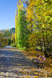 Autumn park details. Polish autumn park in vertical view Royalty Free Stock Photo