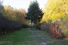 Autumn Park e o trajeto imagem de stock