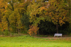 Autumn in a park. Empty white bench on the alley of a park with autumnal background Royalty Free Stock Photo