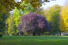 Autumn Park en la isla de Kant en Kaliningrado Fotografía de archivo libre de regalías