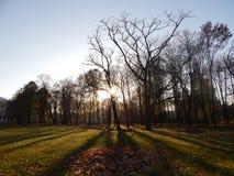 Autumn Park en la puesta del sol Otoño, St Petersburg Imagenes de archivo