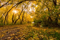 Autumn in the park. Evening in the autumn park, yellow leaves on green grass, fallen maple leaves, dirt road, dense thickets royalty free stock images
