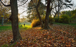 Autumn in park. With fall leaves and people walking behind Royalty Free Stock Photography