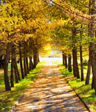 Autumn in a park. Fall season Royalty Free Stock Image