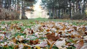 Autumn Park. Fallen foliage on a path in an autumn park Royalty Free Stock Images