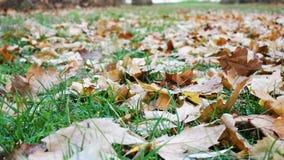 Autumn Park. Fallen foliage on a path in an autumn park Stock Photos