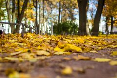 Autumn in the park. Fallen leaves in an autumn park Royalty Free Stock Photo