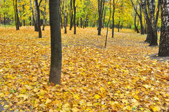 Autumn Park in fallen leaves. Stock Image