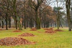 Autumn park with fallen leaves Stock Photos