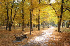 Autumn park and fallen leaves Royalty Free Stock Photography