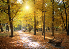 Autumn park and fallen leaves Royalty Free Stock Images