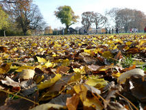 Autumn in the park with fallen leaves Royalty Free Stock Image