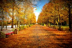Autumn in the park, first snow royalty free stock photo