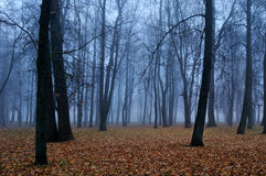 Autumn park in the fog - autumn landscape Royalty Free Stock Photography