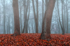 Autumn park in the fog - autumn misty gothic landscape Royalty Free Stock Images