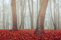 Autumn park in the fog - autumn misty gothic landscape Stock Photography
