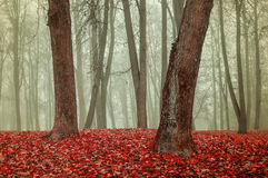Autumn park in the fog - autumn misty gothic landscape Royalty Free Stock Image