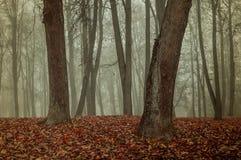 Autumn park in the fog - autumn misty landscape Royalty Free Stock Photos